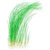 "Eleocharis Vivipara ""Tall Hair Grass"""