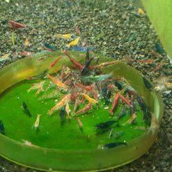 Mixed culled shrimp