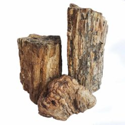 Petrified Wood (Stone)