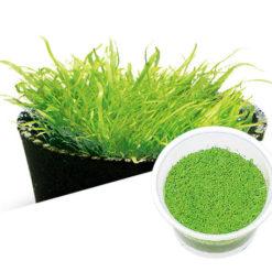 ADA - Utricularia graminifolia
