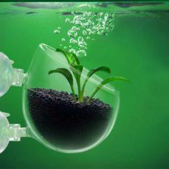 Aquarium Glass Plant Cup 2