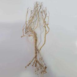 Whisker Wood